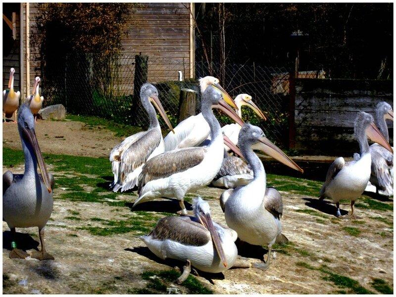 redim zoo1
