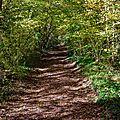 La forêt de mélusine, le massif forestier de mervent-vouvant