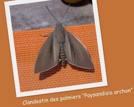 Clandestin_des_palmiers