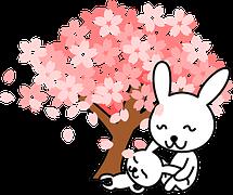 rabbits-154485__180