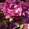 Le bouquet du we