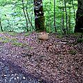 Splendide cèpe d'été au bord d'un chemin...