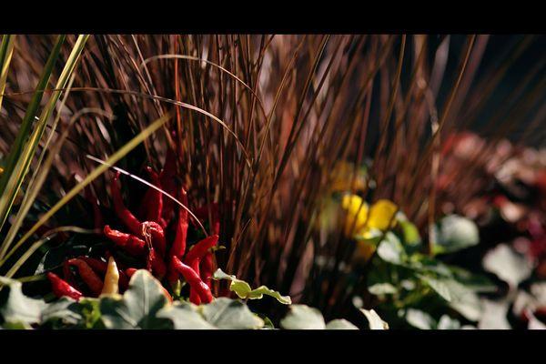 Décoration_automne