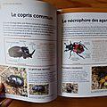Pour observer les insectes