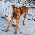 2008 11 24 Kapy dans la neige