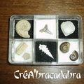 Coffret de fossiles