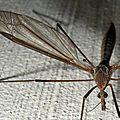 Macro moustique 800x600