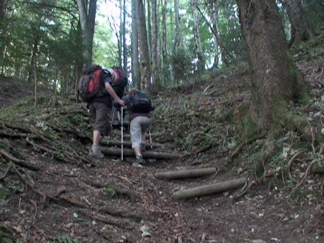 escaliers_forestiers