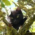 2008 09 27 Un chaton dans l'arbre