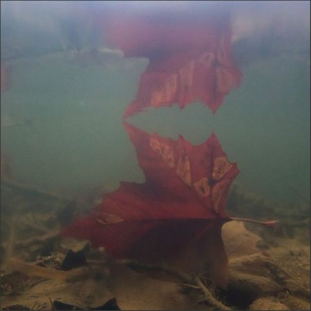 riviere sub feuille rouge 3 reflet complet 121111