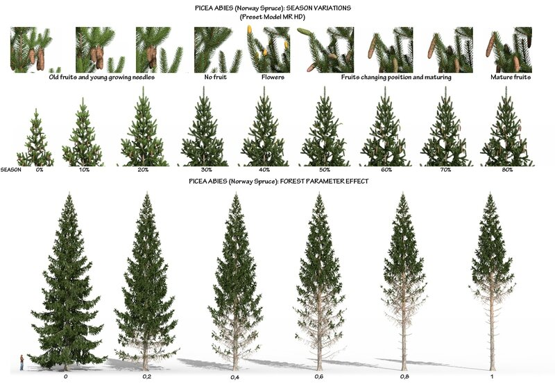07 Picea abies Norway spruce fir tree 3d plant model factory 3ds cad max fbx obj Season