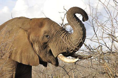 Swaziland (64)