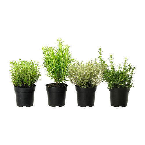 ortig_plante_en_pot__0168868_PE322503_S4