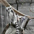 zoo 030807 04