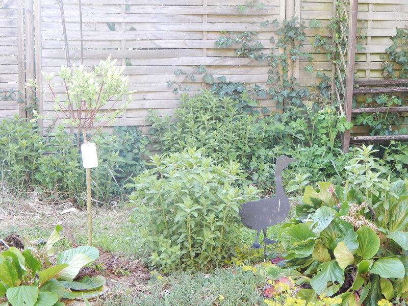 jardin_022