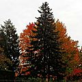 Linxe automne 2410153