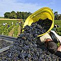 Beaujolais-Vendanges-2014-7440-442x421