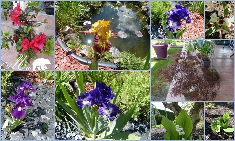 iris et fleurs 20 avril 2015