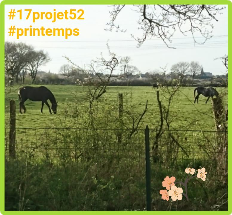 13 projet52 2017 - Printemps
