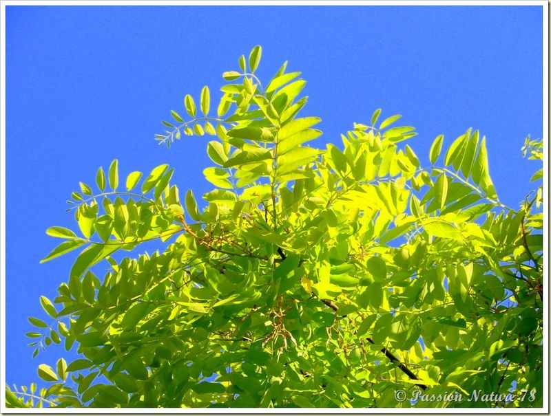 Mon jardin sous un autre angle (10)