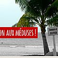 Mer, plage et... ce qu'il faut savoir sur les cubomeduses