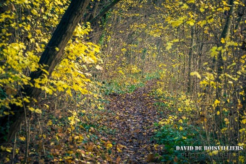 Sentier athégien en automne