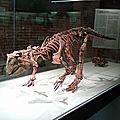 Les débuts de la paléontologie