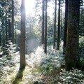 lumière sur le westweg