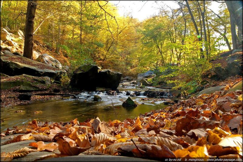 automne_haute_vallee_de_chevreuse_83