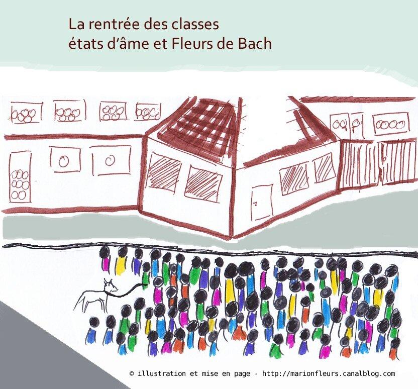 Rentrée scolaire : émotions enfants/parents (2/2) / Conseils pour la Petite Section / Fleurs de Bach variées + Violette des bois