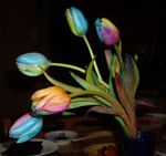 tulipes_scientifiquement_belles