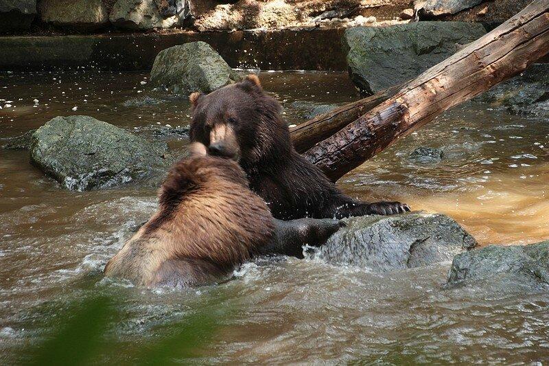 zoo 1-08 324
