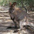 Animaux en Australie