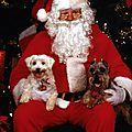 Père Noël et siensiens