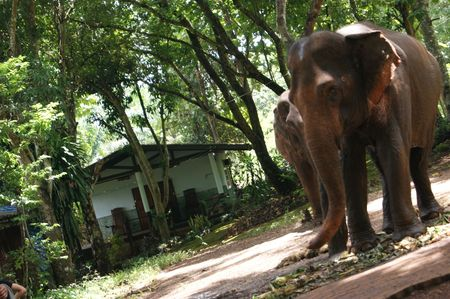 21 maitresse Annabelle en Thailande