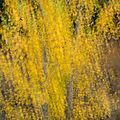 Automne: explosion de jaune