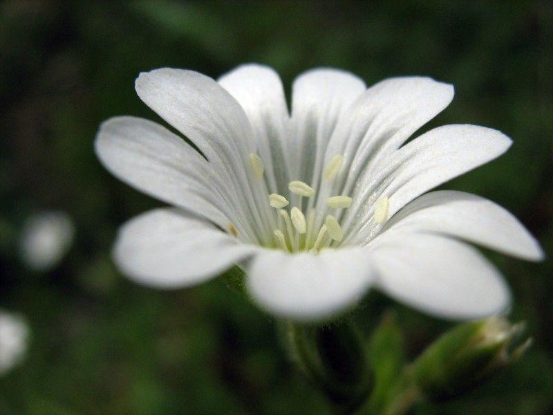 Végétaux fleur (2) 800x600