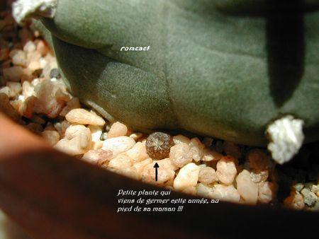 cactus_268