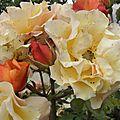 fleurs-roses-2 (11)