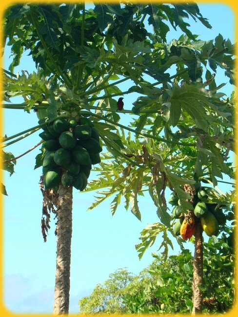 blog_arbre2