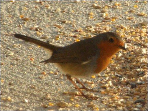oiseaux_05