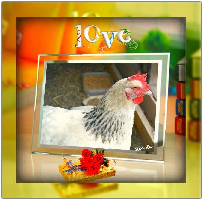 Ma poule Doucette tu seras toujours la plus belle