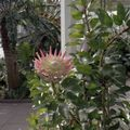 Kew garden 9