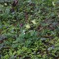 2009 04 27 Etat sauvage le long du Lignon