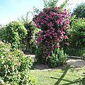 Jardin de Morailles (12)