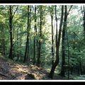 Balade en forêt d'écouves (suite)