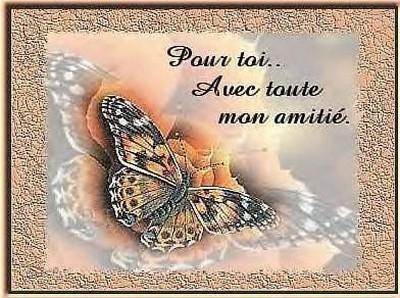 message_papillon_amiti_