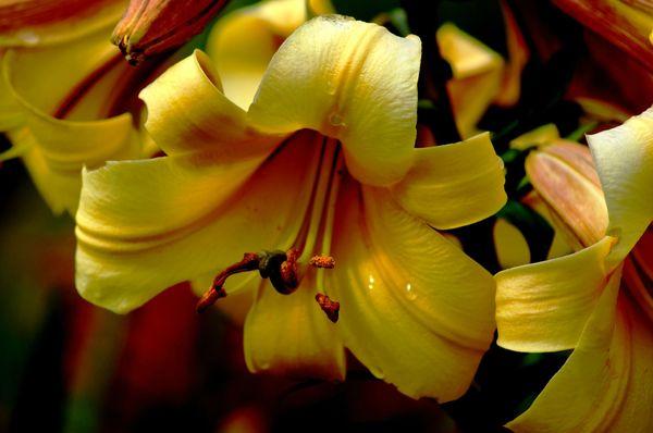 Fleurs du Botanique 089