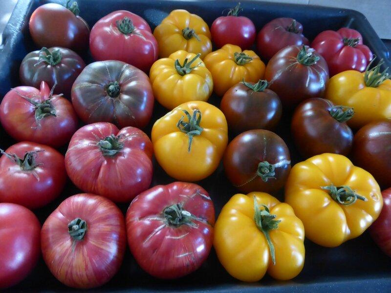 1-tomates (2)