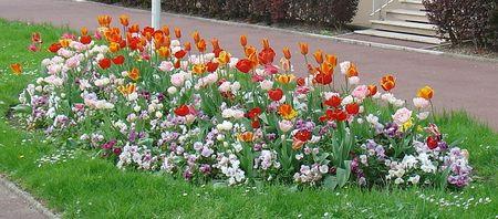 Fleurs_Franche_Comte_JCG